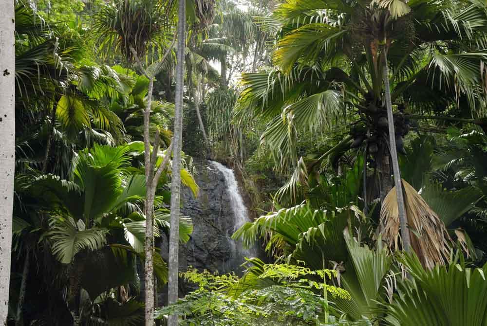 praslin flora and fauna