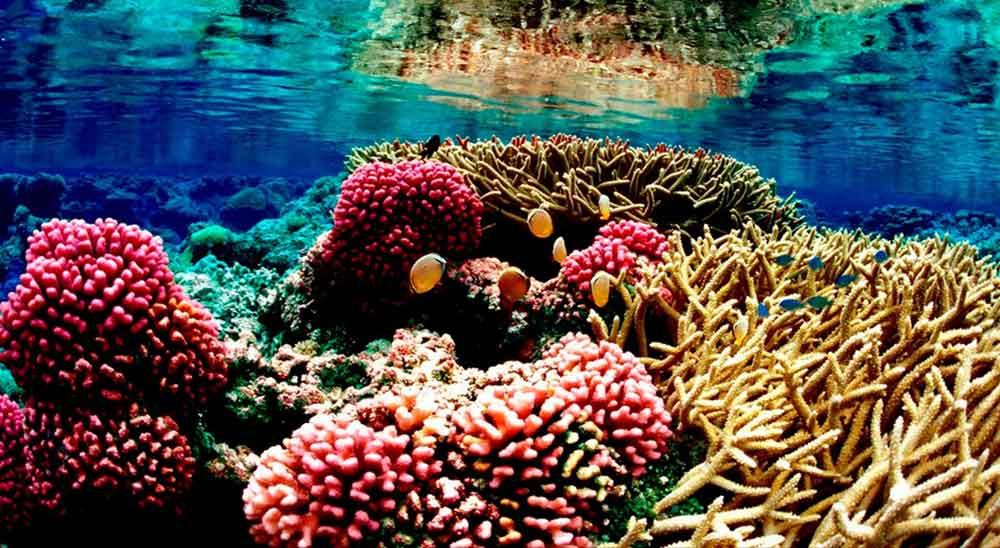 marina park seychelles